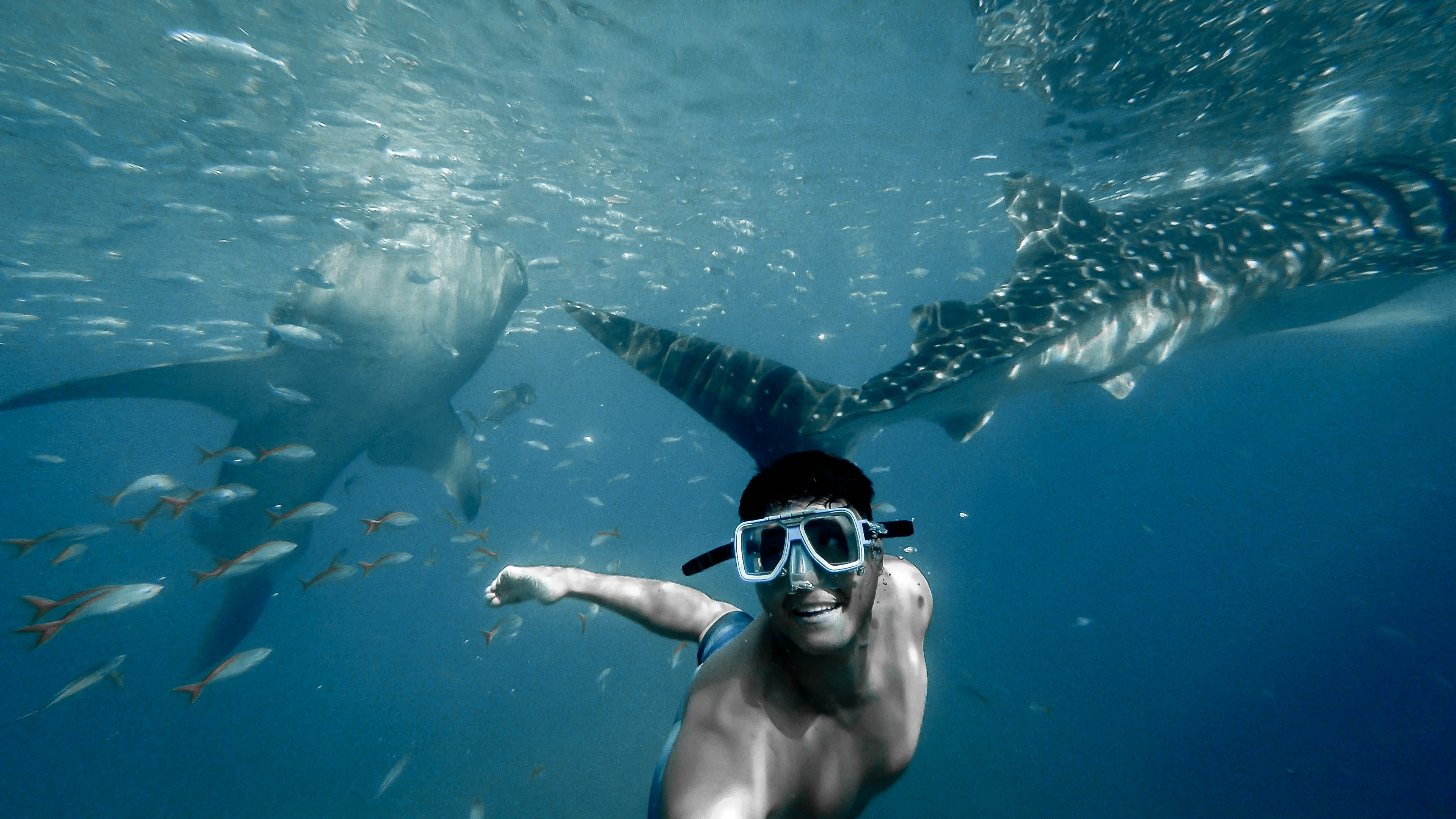 Whale Shark Diving in Dumaguete